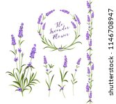 set of lavender flowers... | Shutterstock .eps vector #1146708947