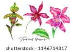 tropical flowers  jungle leaf ... | Shutterstock . vector #1146714317