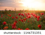 Field Of Wild Flowers At Sunset