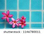 plumelia  frangipani flower... | Shutterstock . vector #1146780011