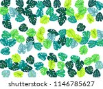 philodendron or monstera plant. ... | Shutterstock .eps vector #1146785627