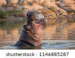 a horizontal  color photograph... | Shutterstock . vector #1146885287