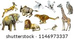 set of watercolor painted... | Shutterstock . vector #1146973337
