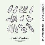 zucchini vector set. vegetarian ... | Shutterstock .eps vector #1146988004