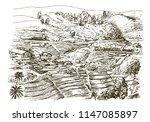 sri lanka. tea plantation.   Shutterstock .eps vector #1147085897