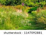 Grass Path Among The Summer...