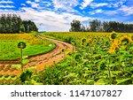 sunflower field road landscape. ... | Shutterstock . vector #1147107827