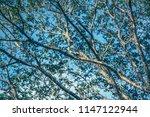 Branch Leaf Tree Sky Blue - Fine Art prints