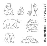 brown bears in contours  ... | Shutterstock .eps vector #1147141394