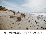 happy dogs playing at the beach | Shutterstock . vector #1147225007