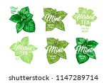 herbal tea with fresh mint logo ... | Shutterstock .eps vector #1147289714