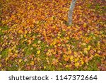 kyoto in late autumn  scattered ... | Shutterstock . vector #1147372664