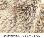 brown long hair fur for...   Shutterstock . vector #1147431737