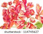 A Rosy Riot Of Red Geraniums I...