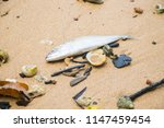 dead fish on the beach. sea... | Shutterstock . vector #1147459454