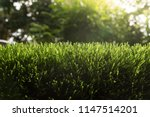 artificial turf with sunshine   Shutterstock . vector #1147514201