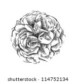 roses  hand drawn  | Shutterstock . vector #114752134