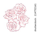 roses  hand drawn  | Shutterstock . vector #114752161