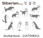 siberian husky illustration dog ... | Shutterstock .eps vector #1147548311