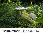mushrooming. a walk in the... | Shutterstock . vector #1147568267