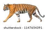 Tiger Isolated On White...