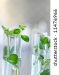 test tubes with small plants | Shutterstock . vector #11476966