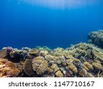 coral reef with branching coral ... | Shutterstock . vector #1147710167
