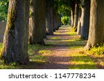 scenic abandoned and old tree... | Shutterstock . vector #1147778234