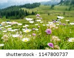daisy meadow and mountains in... | Shutterstock . vector #1147800737