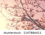 autumn season and nature tree... | Shutterstock . vector #1147886411
