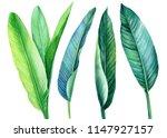 tropical green leaves... | Shutterstock . vector #1147927157