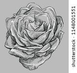 hand drawn rose flower. vector... | Shutterstock .eps vector #1148001551