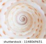 closeup multicolor macro... | Shutterstock . vector #1148069651