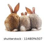 Stock photo three rabbit back isolated on a white background 1148096507
