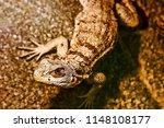 close up view of lizard  | Shutterstock . vector #1148108177
