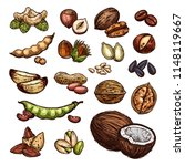 nuts and beans sketch organic... | Shutterstock .eps vector #1148119667