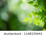 closeup nature view of green... | Shutterstock . vector #1148153441