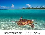 green turtle in caribbean sea... | Shutterstock . vector #114822289