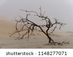 cursed tree in the sea fog on... | Shutterstock . vector #1148277071