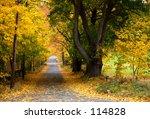autumn tree lined road   Shutterstock . vector #114828