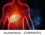 realistic human liver 2d... | Shutterstock . vector #1148446541