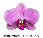 orchid isolated on white... | Shutterstock . vector #1148453777