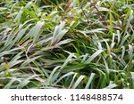 interesting blades of grass... | Shutterstock . vector #1148488574