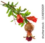 Pomegranate Branch With Flower...