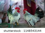 beautiful thai bantam    Shutterstock . vector #1148543144
