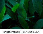 green leaves background. nature ... | Shutterstock . vector #1148551664