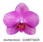 orchid isolated on white... | Shutterstock . vector #1148573624