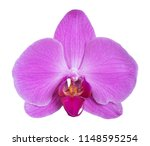orchid isolated on white... | Shutterstock . vector #1148595254