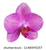 orchid isolated on white... | Shutterstock . vector #1148595257