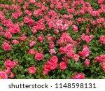 bern   switzerland   june 5... | Shutterstock . vector #1148598131